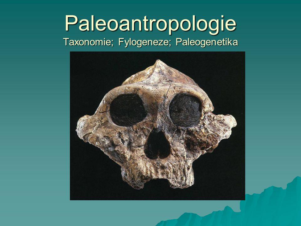 Paleoantropologie Taxonomie; Fylogeneze; Paleogenetika