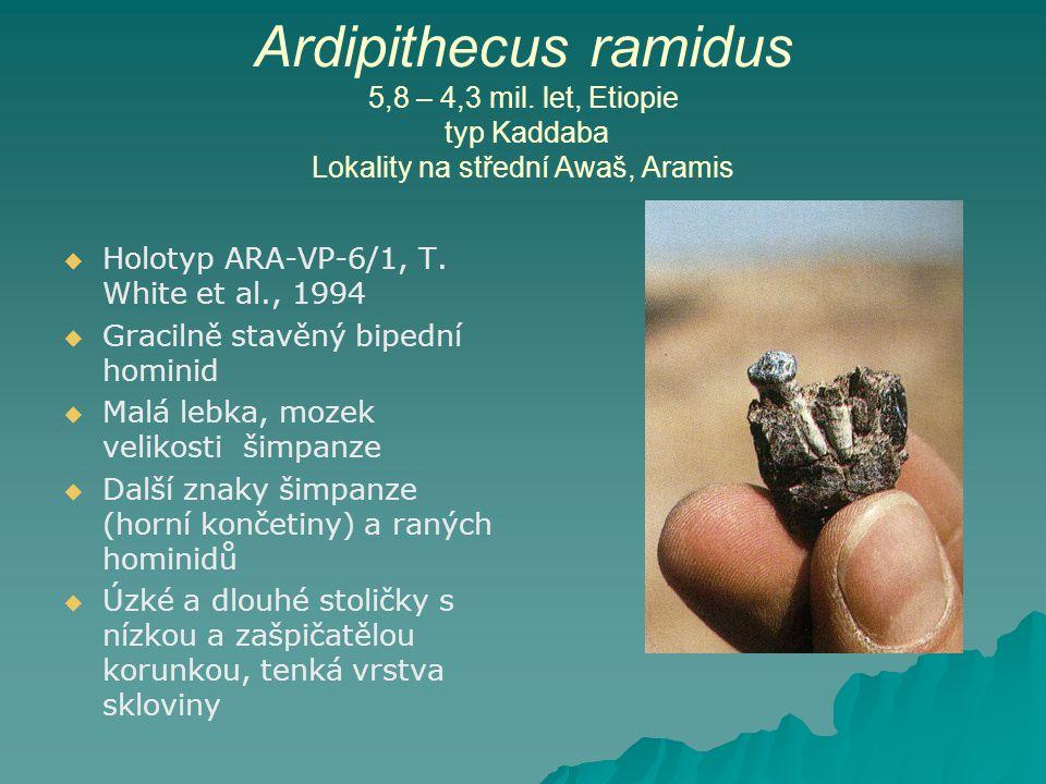 Ardipithecus ramidus 5,8 – 4,3 mil