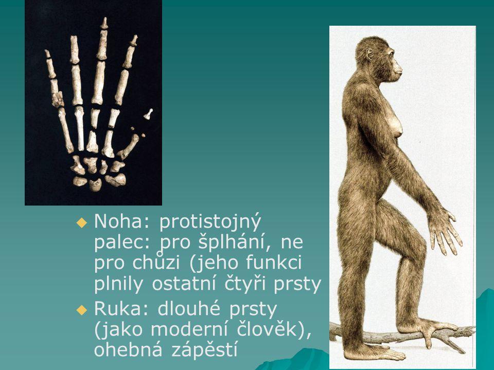 Noha: protistojný palec: pro šplhání, ne pro chůzi (jeho funkci plnily ostatní čtyři prsty