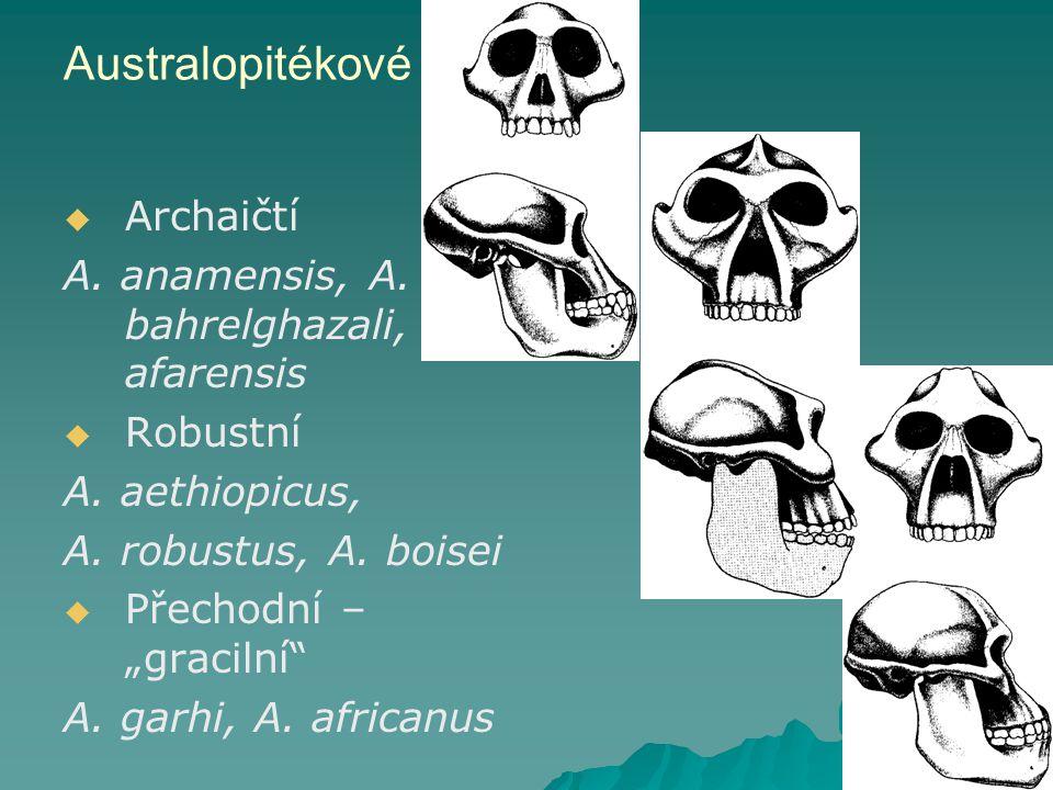 Australopitékové Archaičtí