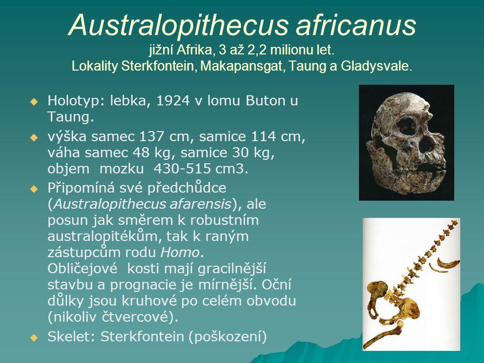 Australopithecus africanus jižní Afrika, 3 až 2,2 milionu let