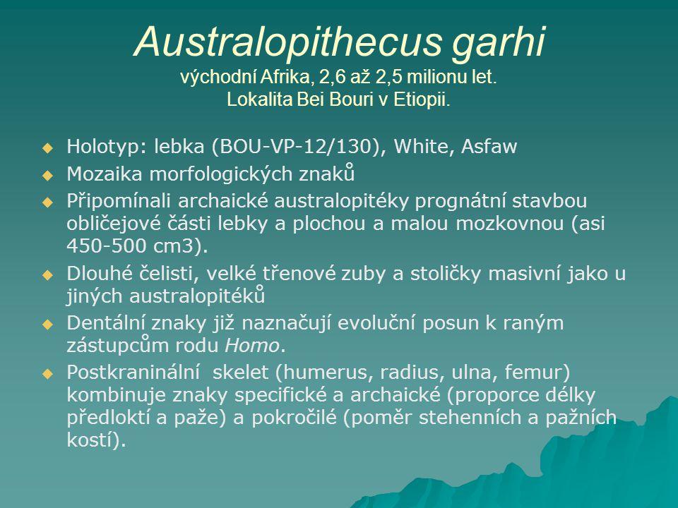 Australopithecus garhi východní Afrika, 2,6 až 2,5 milionu let