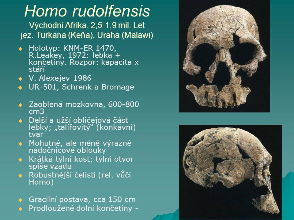 Homo rudolfensis Východní Afrika, 2,5-1,9 mil. Let jez