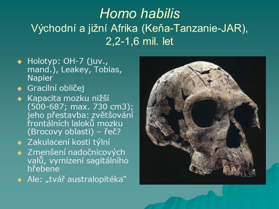 Homo habilis Východní a jižní Afrika (Keňa-Tanzanie-JAR), 2,2-1,6 mil