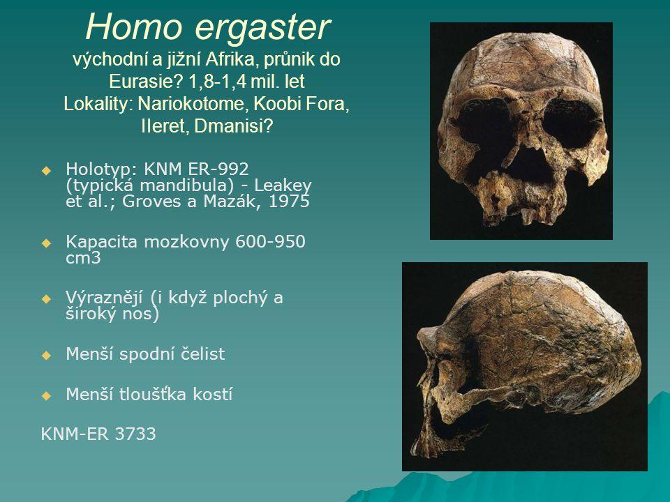 Homo ergaster východní a jižní Afrika, průnik do Eurasie. 1,8-1,4 mil