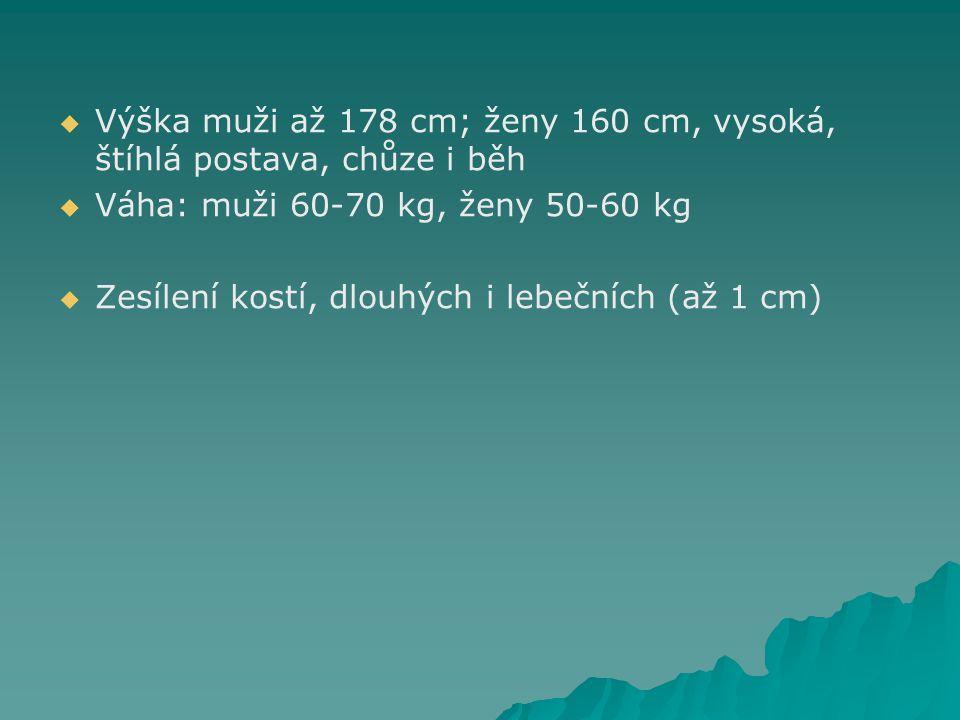 Výška muži až 178 cm; ženy 160 cm, vysoká, štíhlá postava, chůze i běh