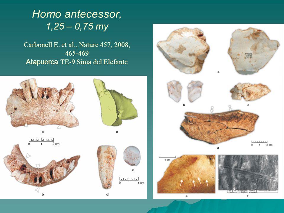 Homo antecessor, 1,25 – 0,75 my Carbonell E. et al