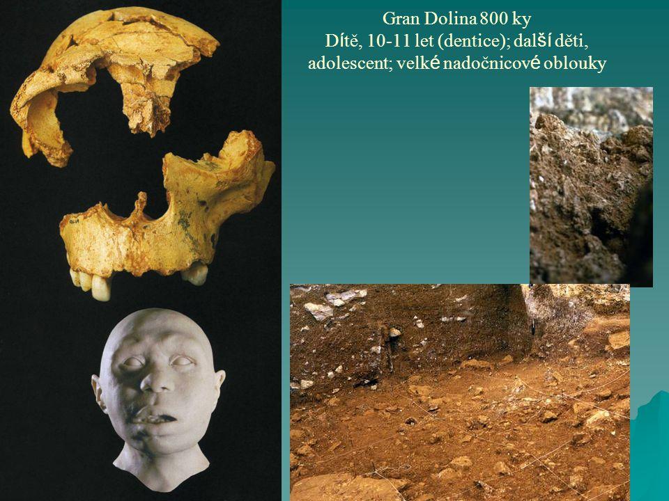 Gran Dolina 800 ky Dítě, 10-11 let (dentice); další děti, adolescent; velké nadočnicové oblouky