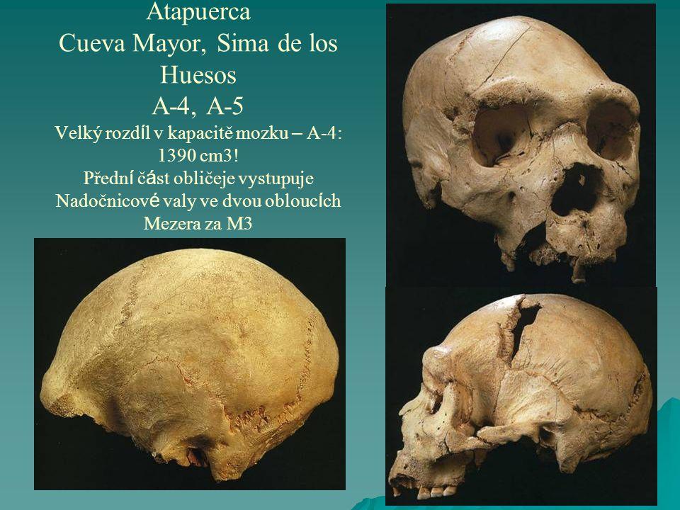 Atapuerca Cueva Mayor, Sima de los Huesos A-4, A-5 Velký rozdíl v kapacitě mozku – A-4: 1390 cm3.