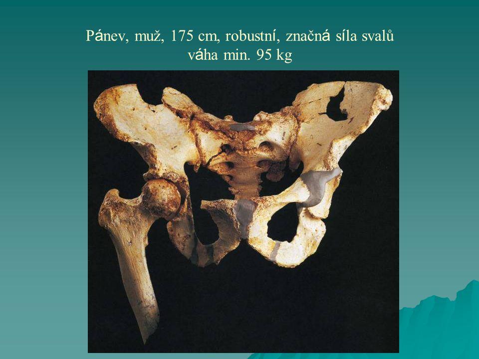 Pánev, muž, 175 cm, robustní, značná síla svalů váha min. 95 kg