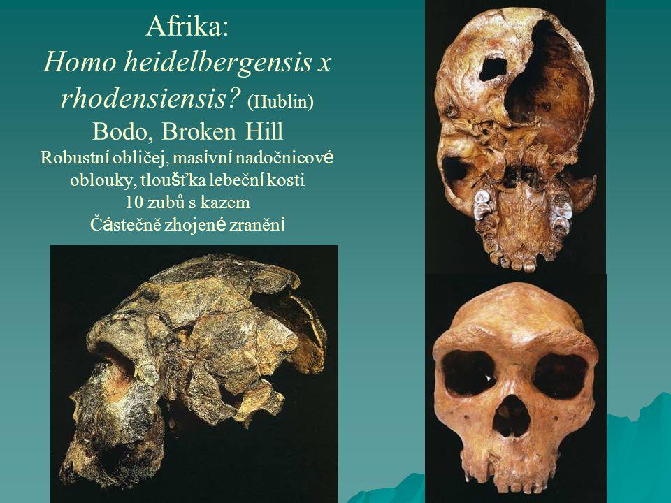 Afrika: Homo heidelbergensis x rhodensiensis