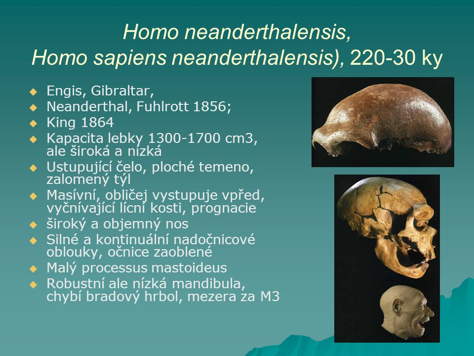 Homo neanderthalensis, Homo sapiens neanderthalensis), 220-30 ky