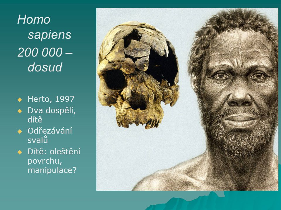 Homo sapiens 200 000 – dosud Herto, 1997 Dva dospělí, dítě