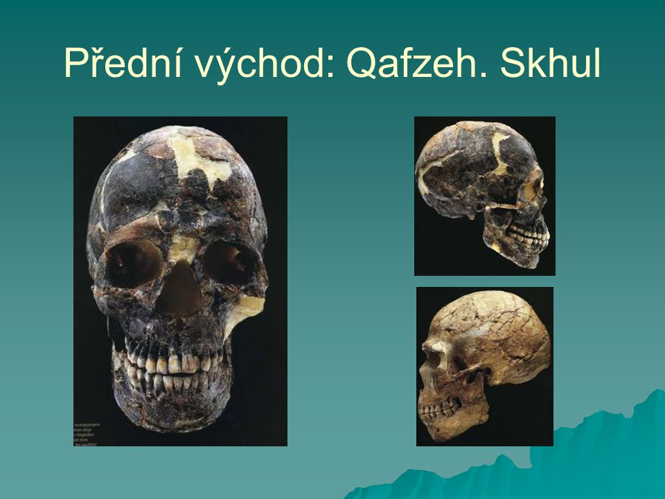 Přední východ: Qafzeh. Skhul