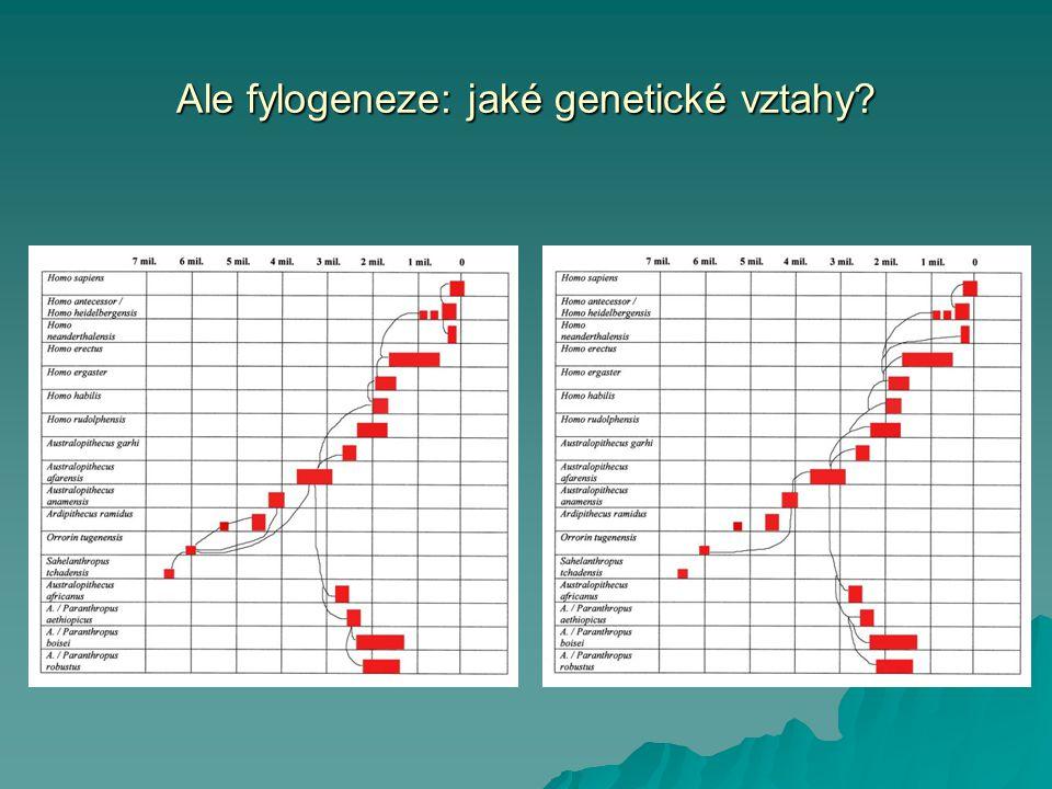 Ale fylogeneze: jaké genetické vztahy