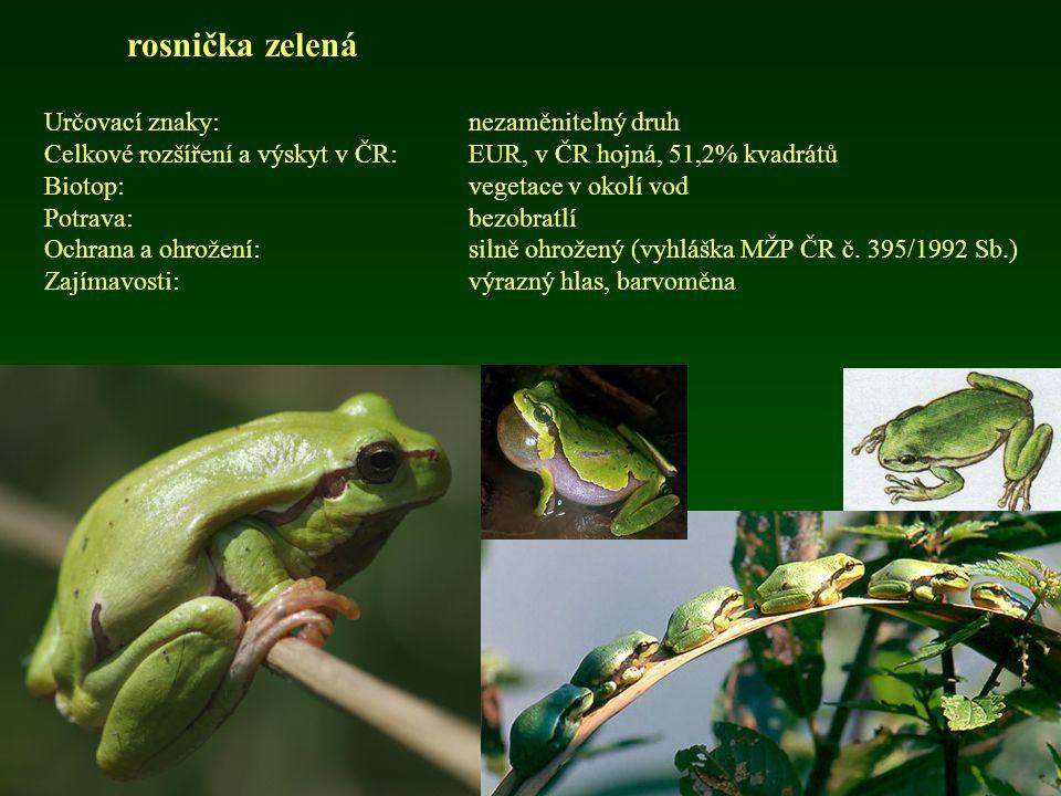 rosnička zelená Určovací znaky: nezaměnitelný druh