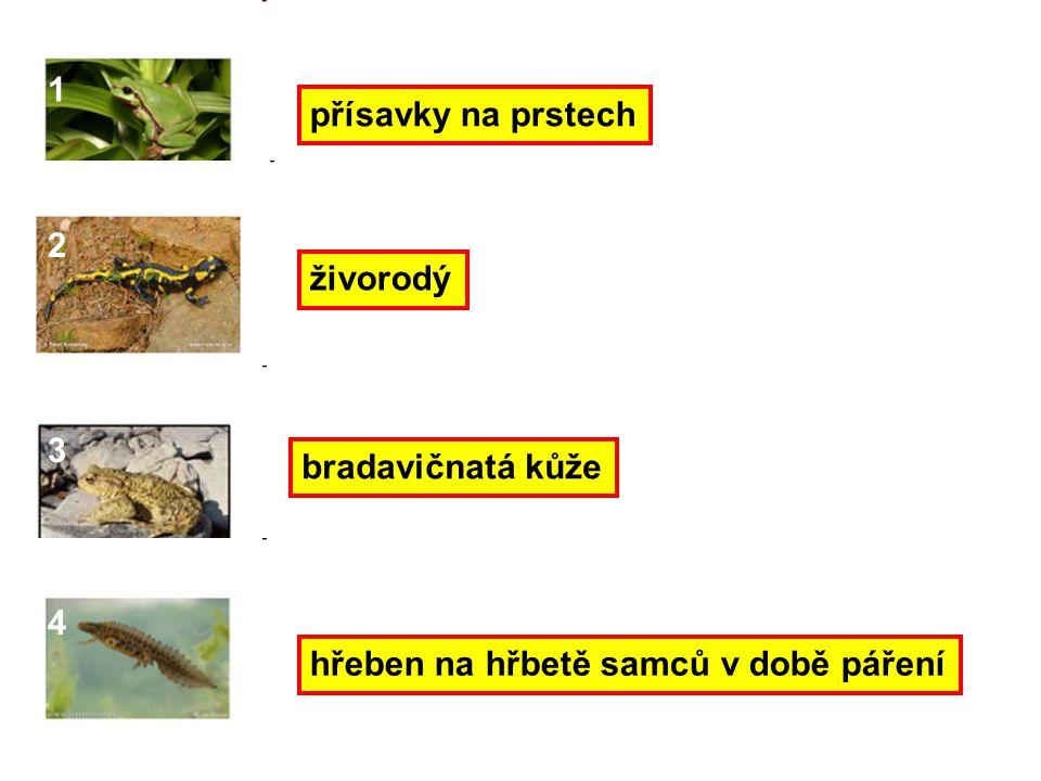 1 přísavky na prstech 2 živorodý 3 bradavičnatá kůže 4 hřeben na hřbetě samců v době páření