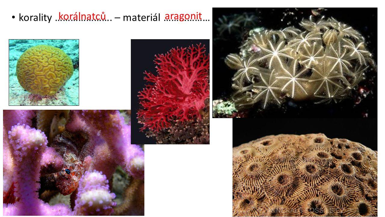 korálnatců aragonit korality …………………. – materiál ………………