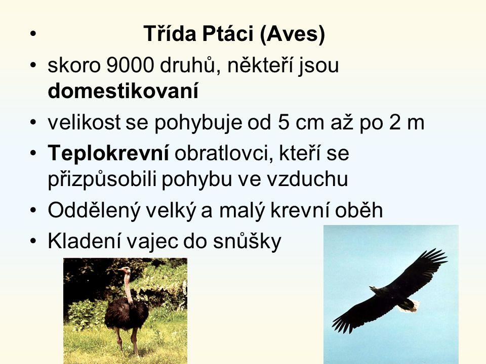 Třída Ptáci (Aves) skoro 9000 druhů, někteří jsou domestikovaní. velikost se pohybuje od 5 cm až po 2 m.
