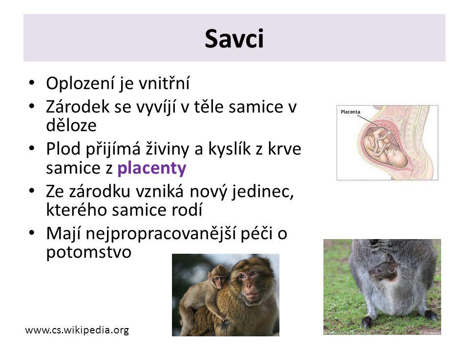 Savci Oplození je vnitřní Zárodek se vyvíjí v těle samice v děloze