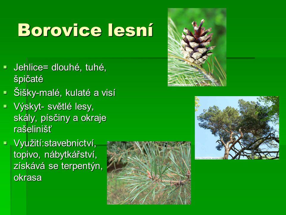 Borovice lesní Jehlice= dlouhé, tuhé, špičaté