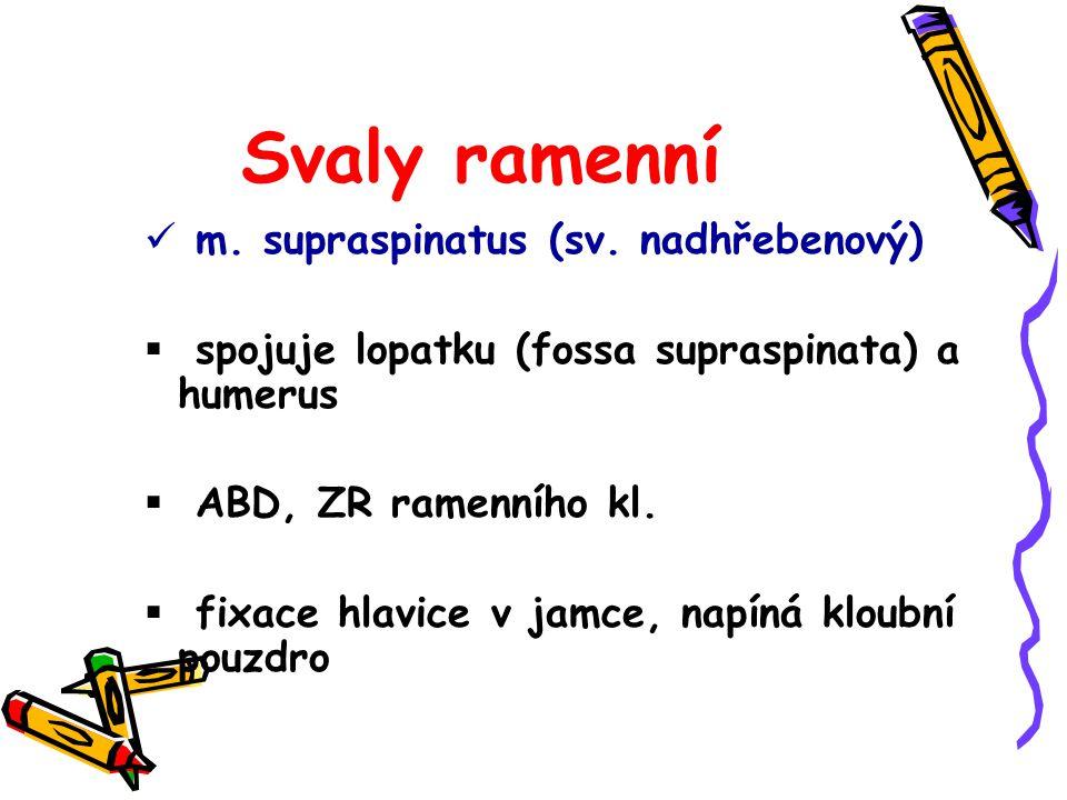 Svaly ramenní m. supraspinatus (sv. nadhřebenový)