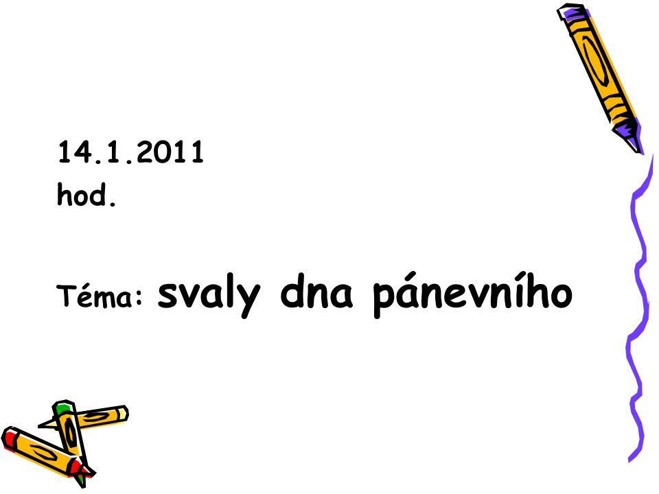 14.1.2011 hod. Téma: svaly dna pánevního