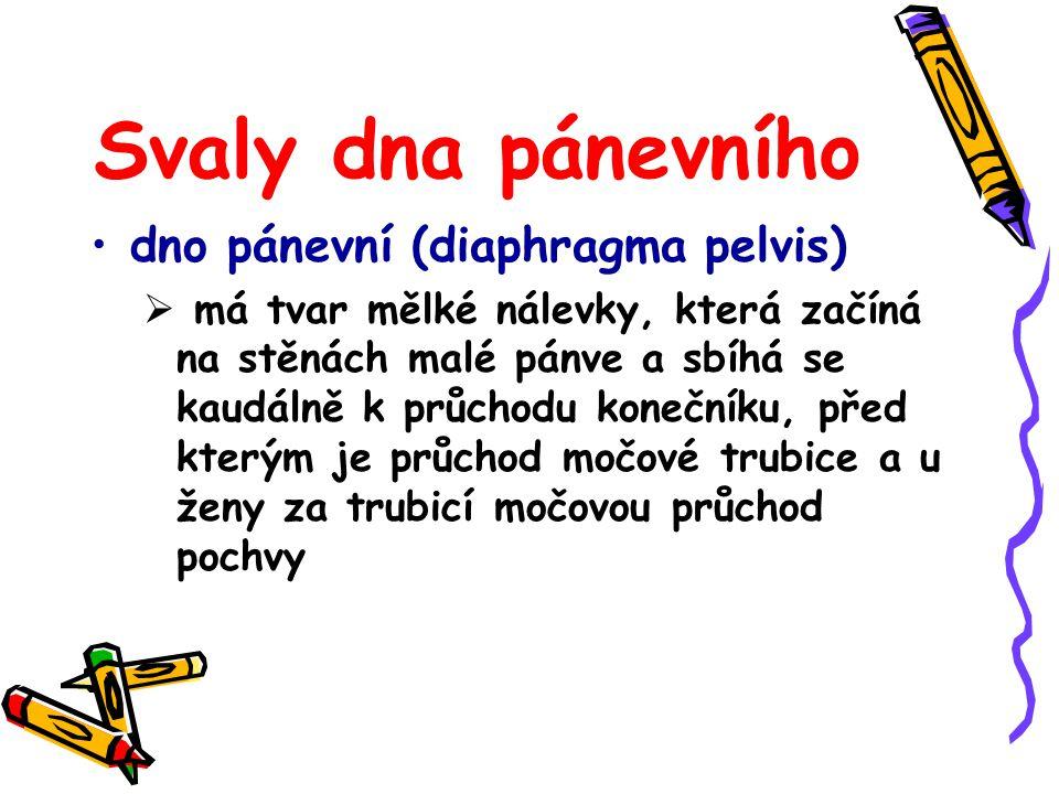 Svaly dna pánevního dno pánevní (diaphragma pelvis)