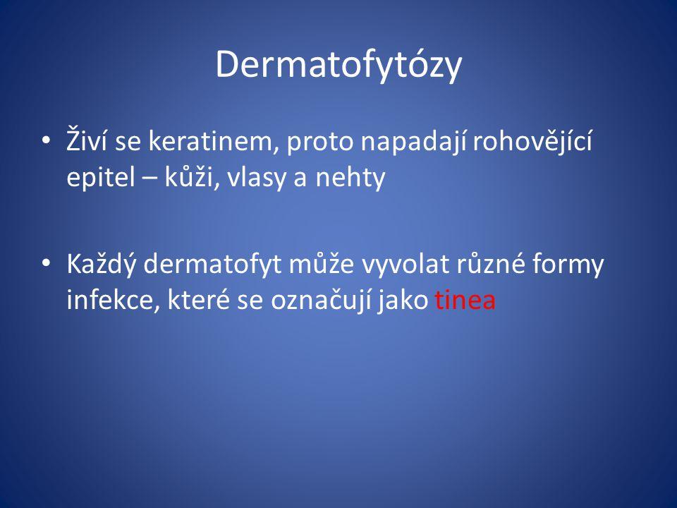 Dermatofytózy Živí se keratinem, proto napadají rohovějící epitel – kůži, vlasy a nehty.