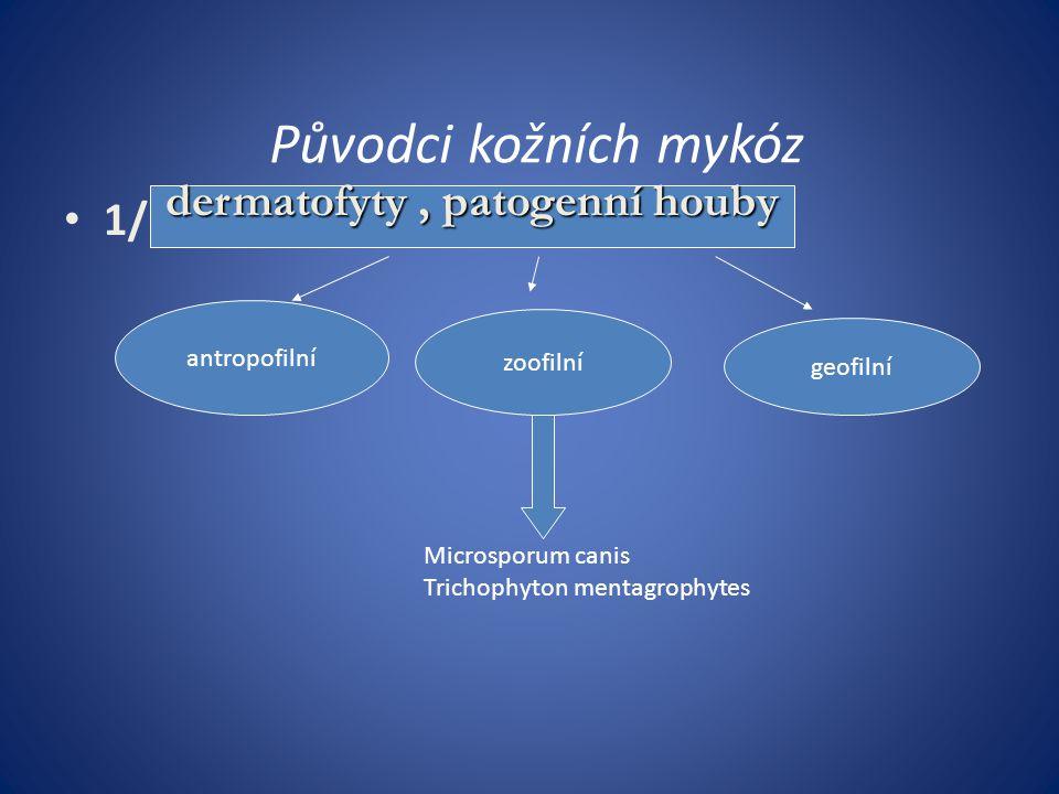 dermatofyty , patogenní houby