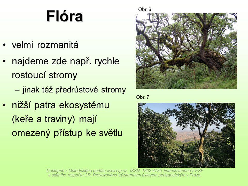 Flóra velmi rozmanitá najdeme zde např. rychle rostoucí stromy