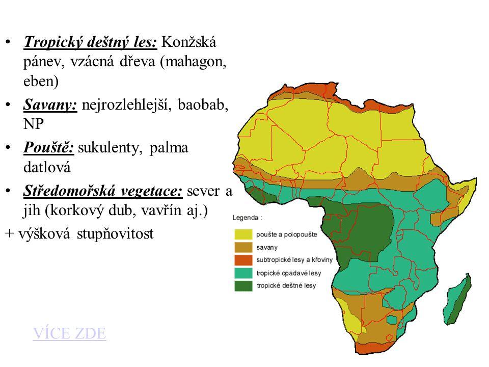 Tropický deštný les: Konžská pánev, vzácná dřeva (mahagon, eben)