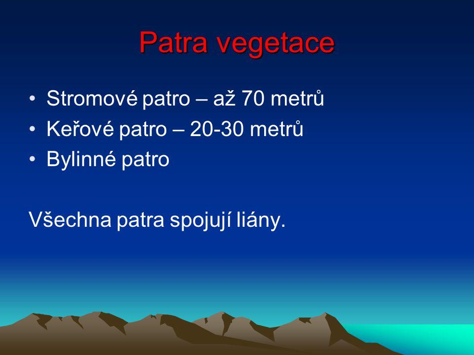 Patra vegetace Stromové patro – až 70 metrů Keřové patro – 20-30 metrů
