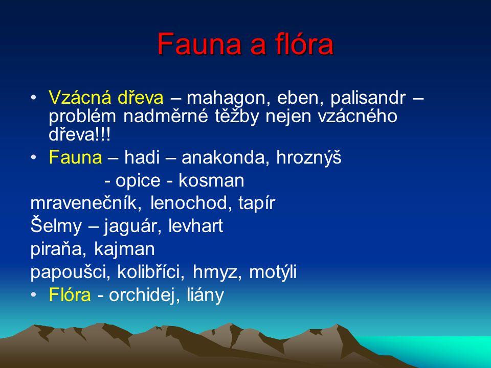 Fauna a flóra Vzácná dřeva – mahagon, eben, palisandr – problém nadměrné těžby nejen vzácného dřeva!!!
