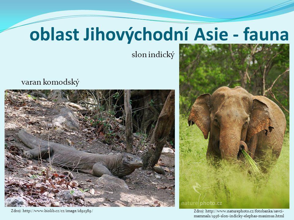 oblast Jihovýchodní Asie - fauna