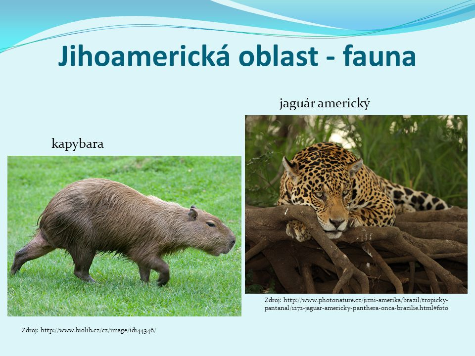 Jihoamerická oblast - fauna