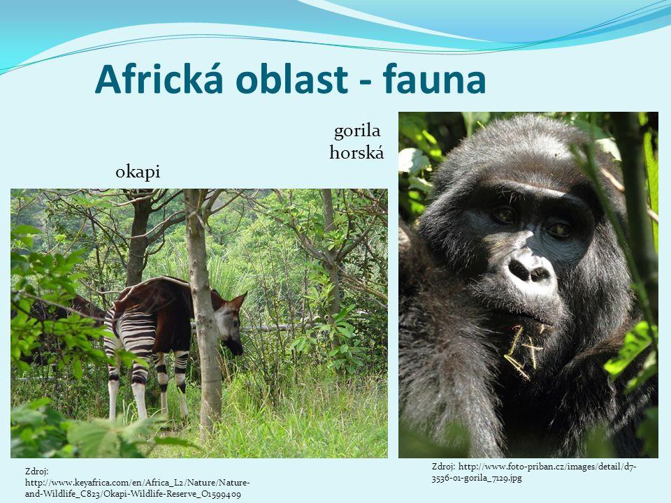Africká oblast - fauna gorila horská okapi
