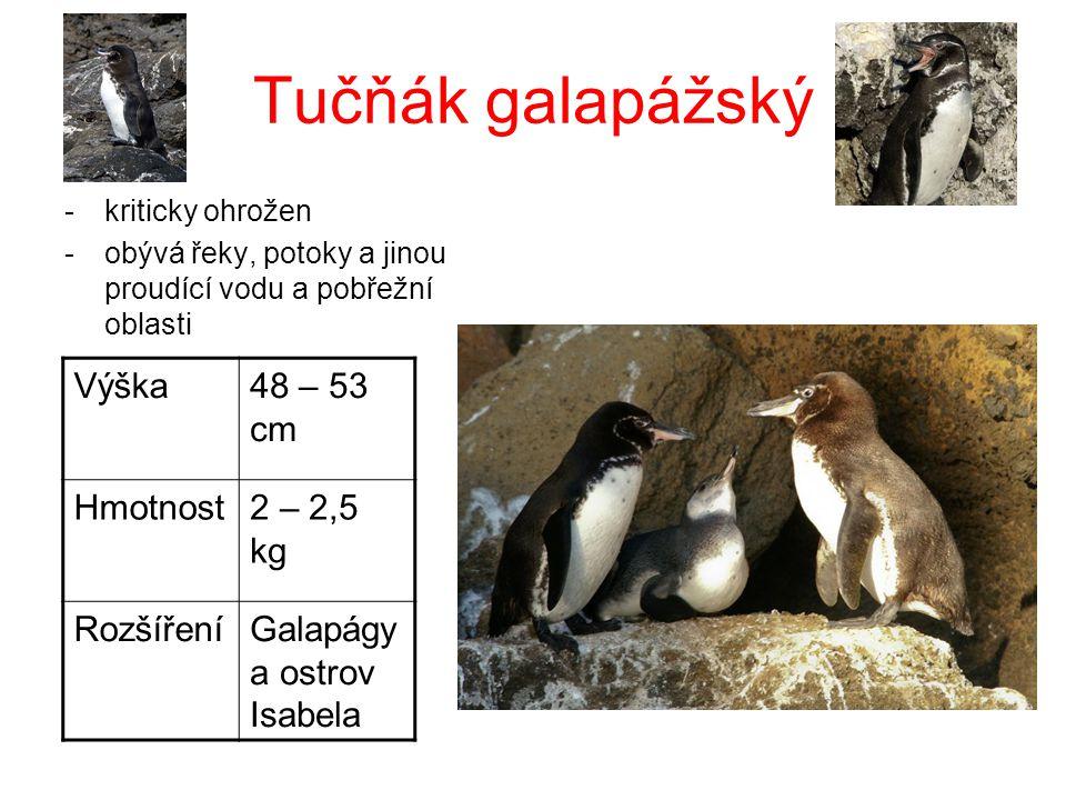 Tučňák galapážský Výška 48 – 53 cm Hmotnost 2 – 2,5 kg Rozšíření