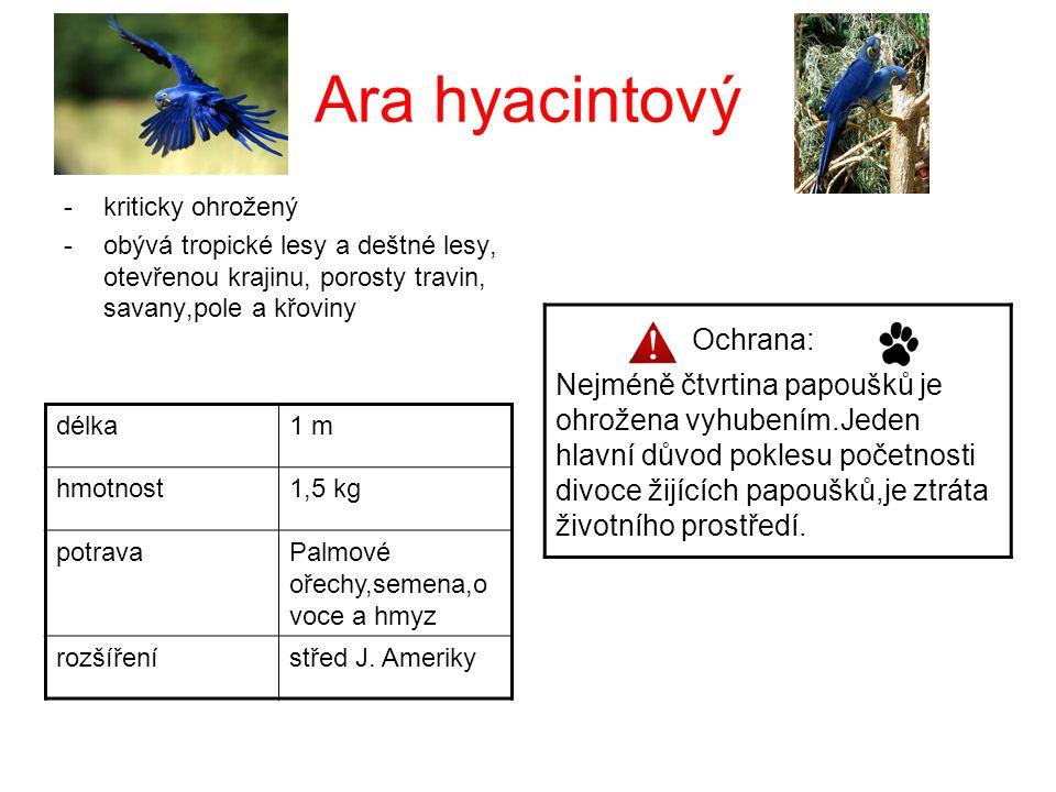 Ara hyacintový Ochrana: