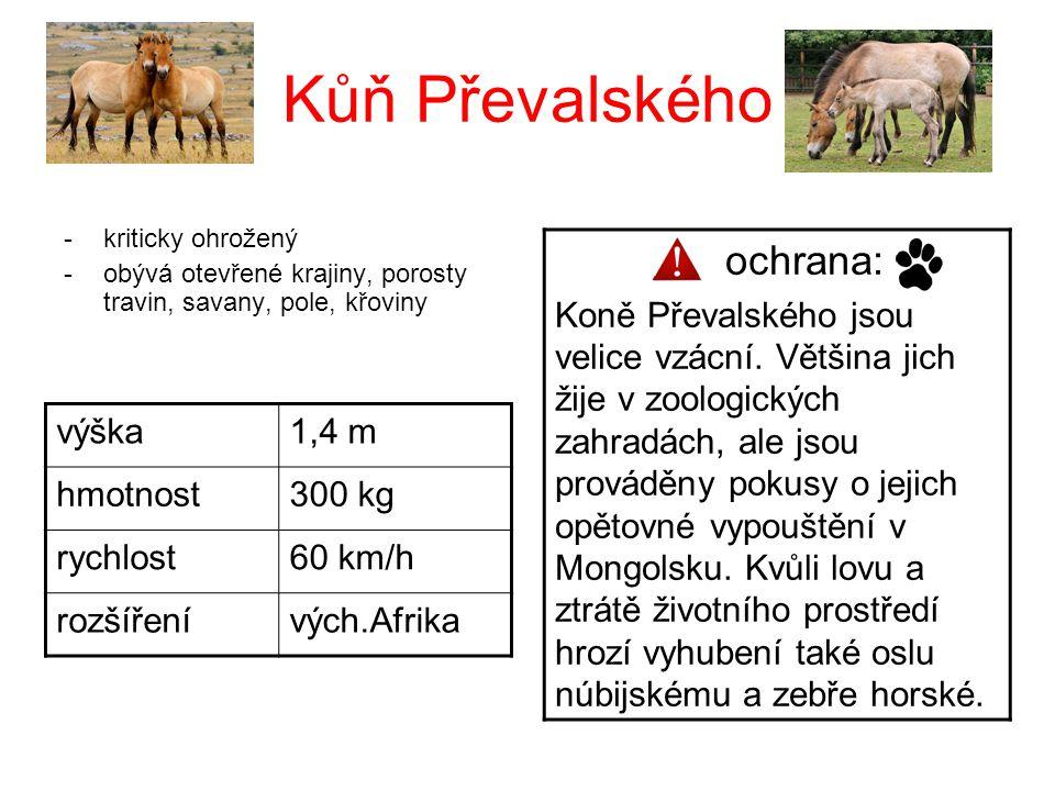Kůň Převalského ochrana:
