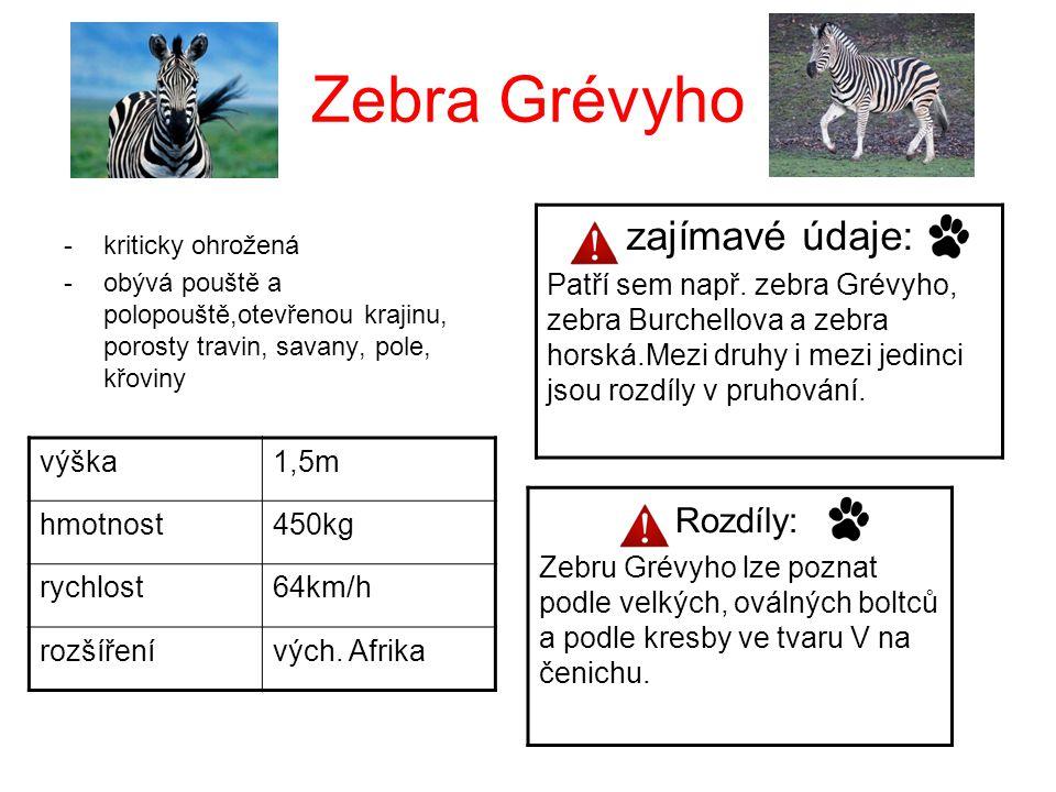 Zebra Grévyho zajímavé údaje: Rozdíly: