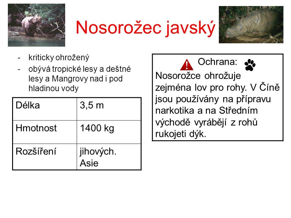 Nosorožec javský Ochrana: