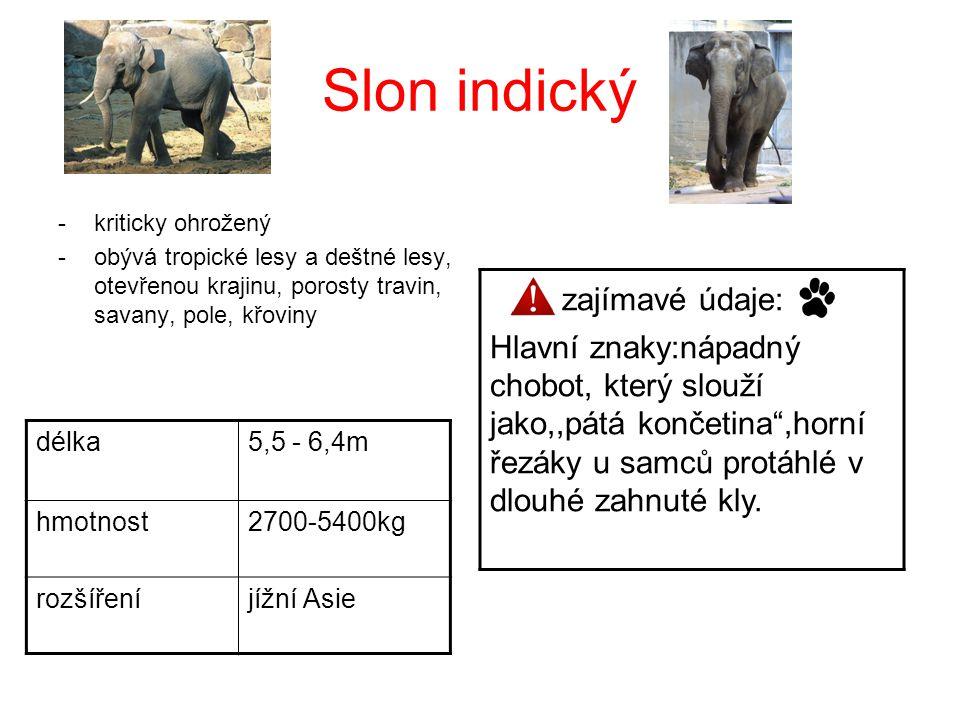Slon indický zajímavé údaje:
