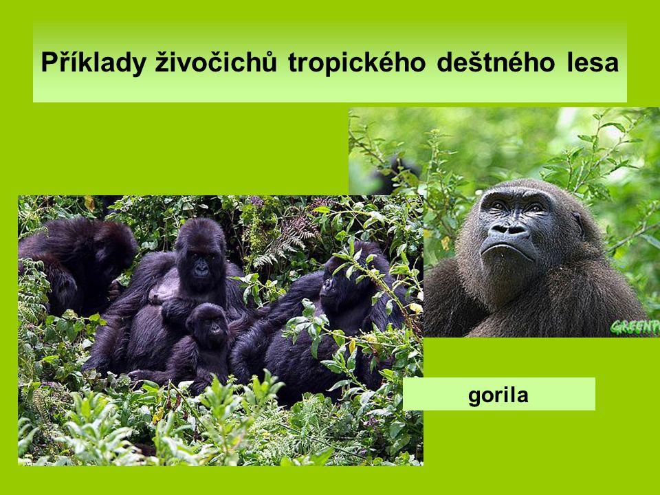 Příklady živočichů tropického deštného lesa