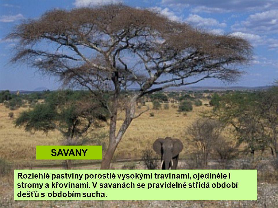 SAVANY Rozlehlé pastviny porostlé vysokými travinami, ojediněle i stromy a křovinami.