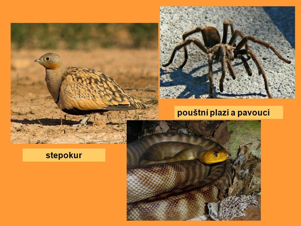 pouštní plazi a pavouci
