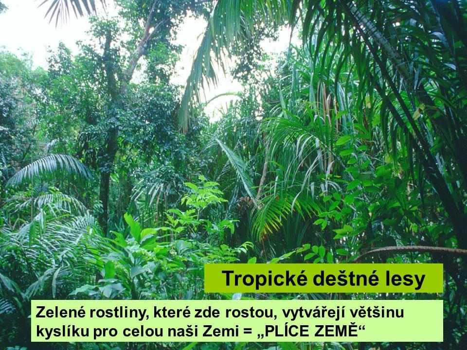 """Tropické deštné lesy Zelené rostliny, které zde rostou, vytvářejí většinu kyslíku pro celou naši Zemi = """"PLÍCE ZEMĚ"""