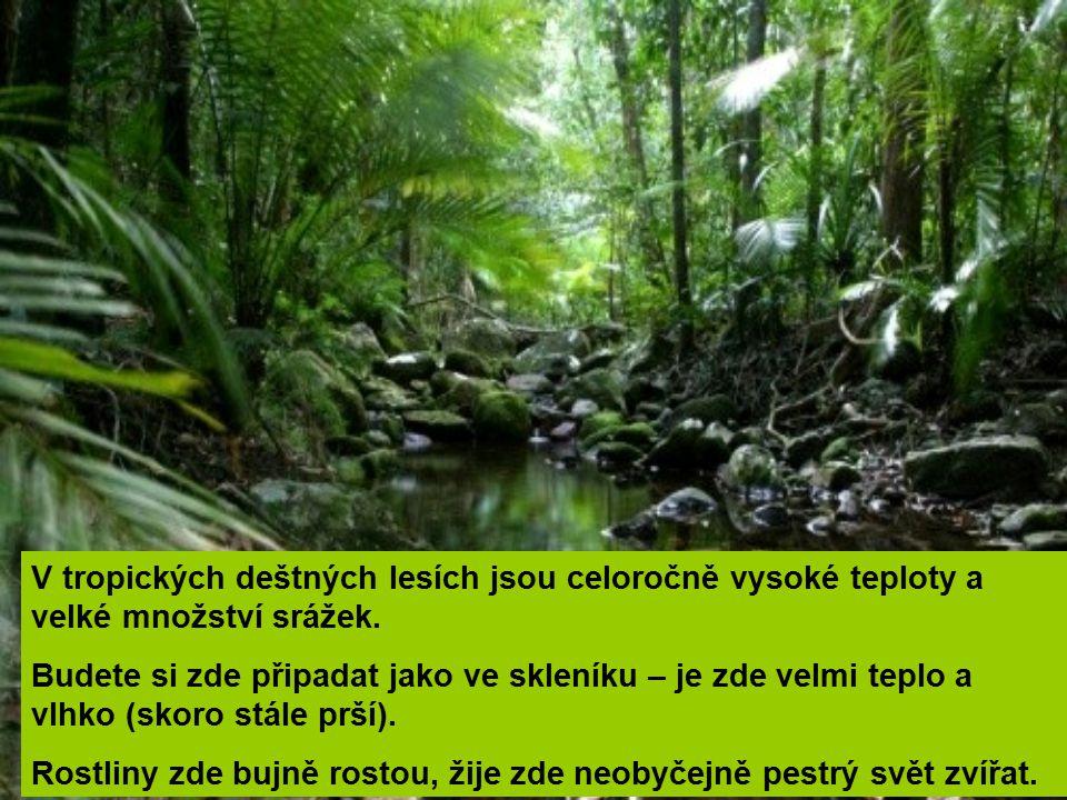 V tropických deštných lesích jsou celoročně vysoké teploty a velké množství srážek.