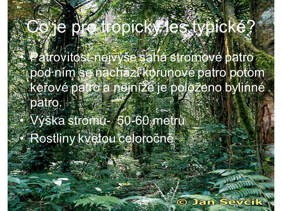 Co je pro tropický les typické