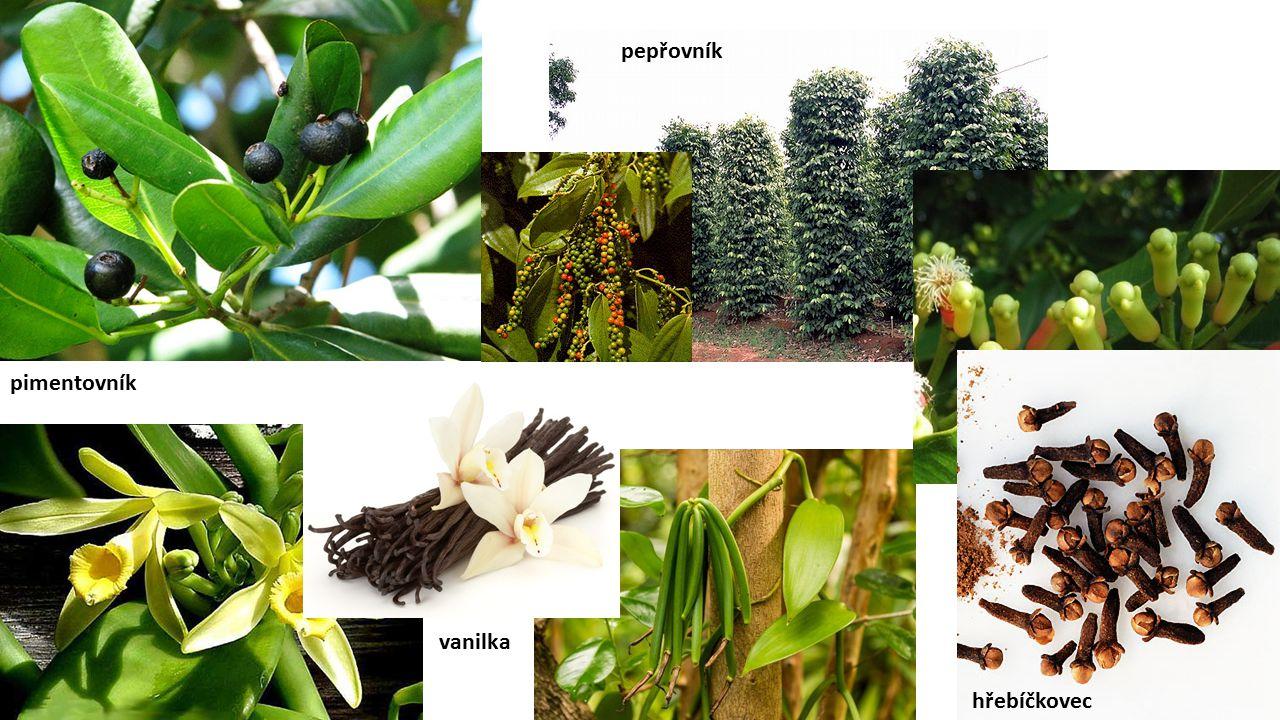 pepřovník pimentovník vanilka hřebíčkovec